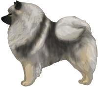 Gray Cream and Black Keeshond