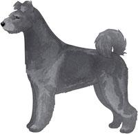 Gray Pumi