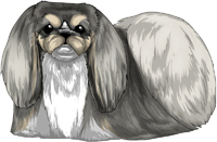 Gray, Tan, & White Pekingese