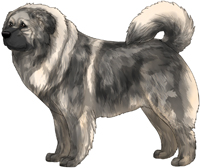 Grey Sable Masked Caucasian Mountain Dog