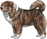 Irish Brindle Caucasian Mountain Dog