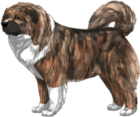 Irish Brindle Masked Caucasian Mountain Dog