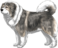 Irish Grey Sable Caucasian Mountain Dog