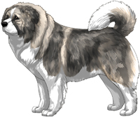 Irish Grey Sable Masked Caucasian Mountain Dog