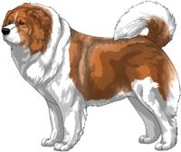 Irish Red Caucasian Mountain Dog