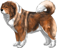 Irish Red Sable Caucasian Mountain Dog