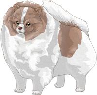 Isabella Parti  Pomeranian