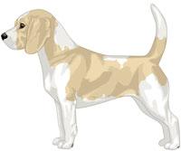 Lemon & White Beagle