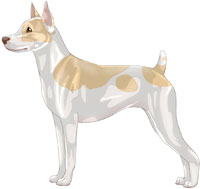 Lemon & White Rat Terrier