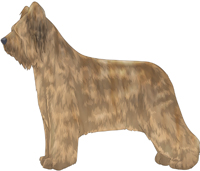 Light Tawny Briard