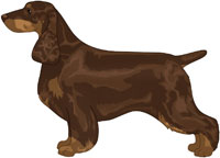 Liver and Tan Field Spaniel