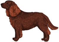 Liver American Water Spaniel