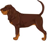 Liver Bloodhound