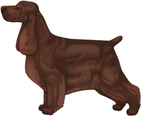 Liver English Cocker Spaniel
