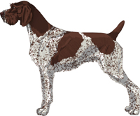 Liver and White - Patched and Ticked German Wirehaired Pointer