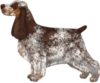 Liver Roan and Tan English Cocker Spaniel