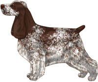 Liver Roan English Cocker Spaniel
