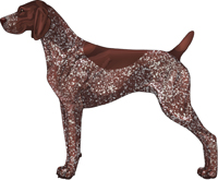 Liver Roan German Shorthaired Pointer