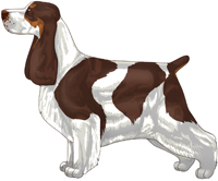 Liver White and Tan English Cocker Spaniel