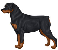 Black and Mahogany Rottweiler
