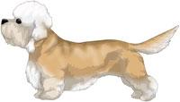 Mustard Dandie Dinmont Terrier