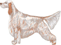 Orange Belton English Setter