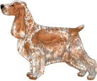 Orange Roan English Cocker Spaniel