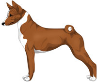 Red and White Basenji