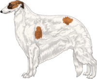 Red with Black Mask and Extreme White Piebald Borzoi