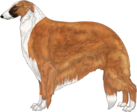 Red with Black Mask and Irish White Markings Borzoi