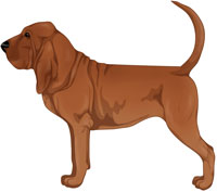 Red Bloodhound