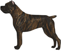 Red brindle with black mask Cane Corso
