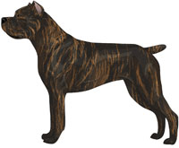 Red Brindle Cane Corso