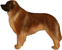 Red-Brown Leonberger