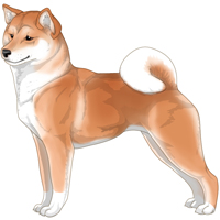 Red Buff White Urajiro with White Shiba Inu