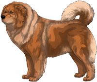 Red Caucasian Mountain Dog