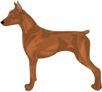 Red German Pinscher
