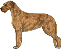 Red Irish Wolfhound