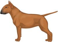 Red Miniature Bull Terrier