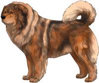 Red Sable Caucasian Mountain Dog