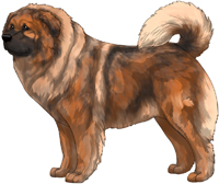 Red Sable Masked Caucasian Mountain Dog