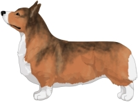 Red with Sabling Pembroke Welsh Corgi