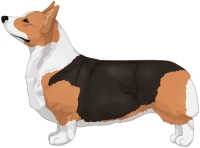 Red Headed Tricolor Pembroke Welsh Corgi