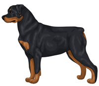 Black and Rust Rottweiler