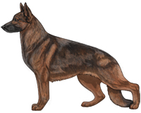 Sable Black and Red German Shepherd Dog