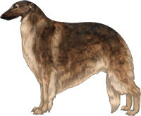 Sable with Black Mask Borzoi