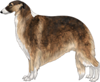 Sable with Black Mask and Irish White Markings Borzoi