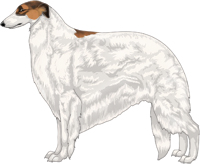 Sabled Red with Black Mask and Extreme White Piebald Borzoi