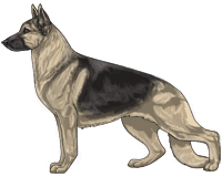 Saddleback Black and Cream German Shepherd Dog
