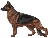 Saddleback Black and Red German Shepherd Dog